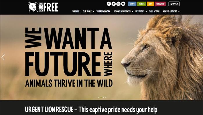 24 Born Free homepage
