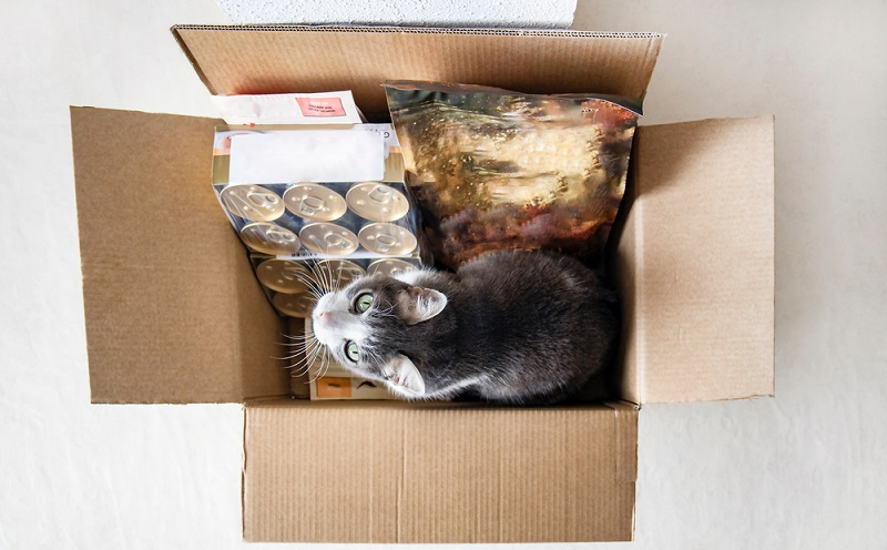 box with cat and supplies. Image: shutterstock
