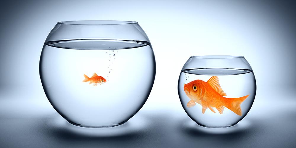 big fish small pond