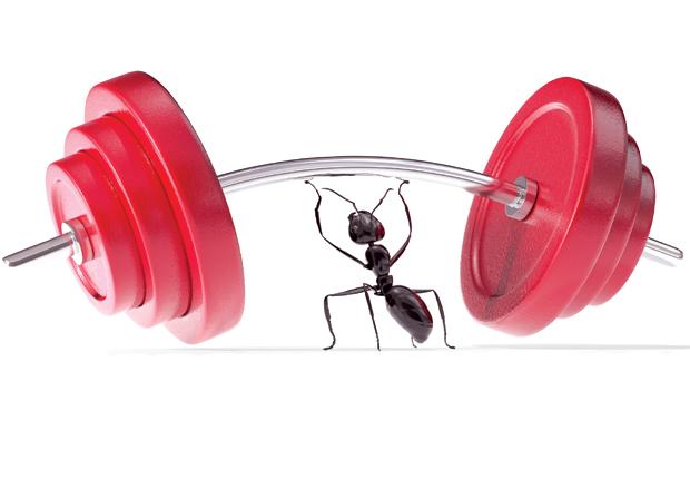 inex ant