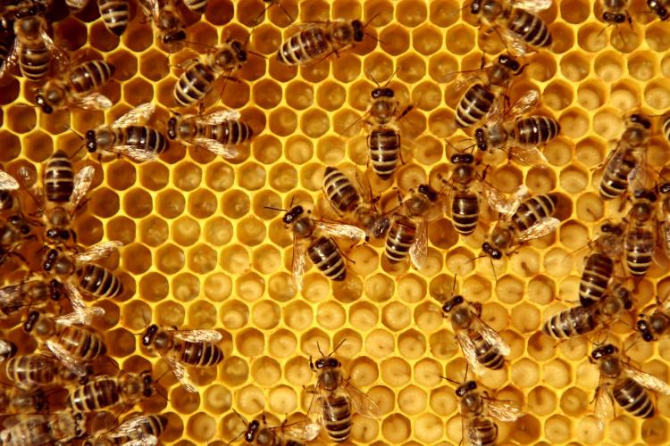 honey hive
